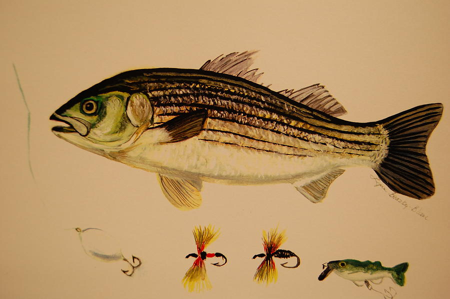 Striper with lures painting by lynn beazley blair for Striper fish bait