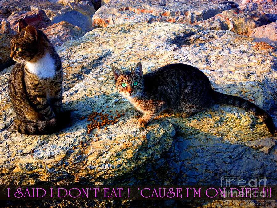 Hanza Turgul Photograph - Strong-willed Cat by Hanza Turgul