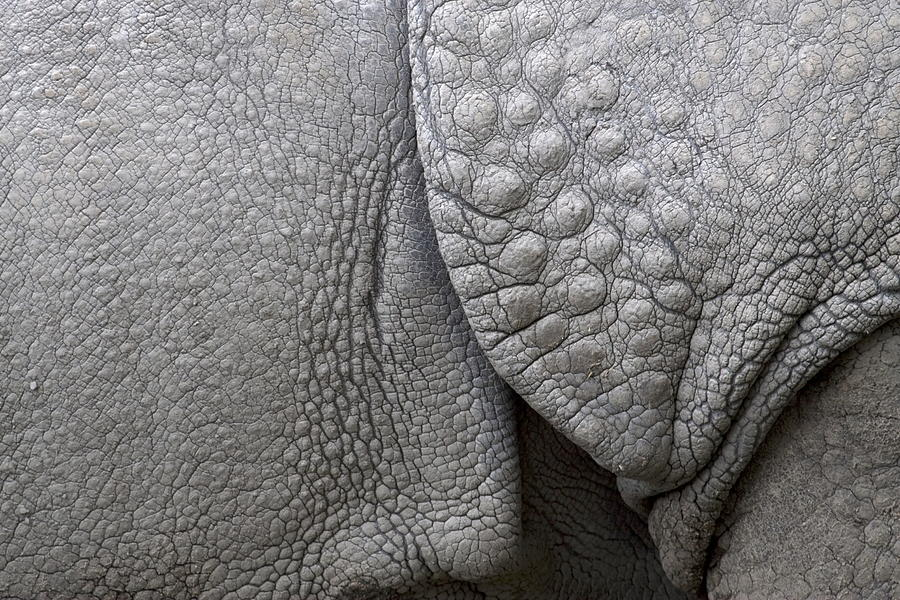 Structure Of The Skin Of An Indian Rhinoceros In A Zoo In The Netherlands Photograph