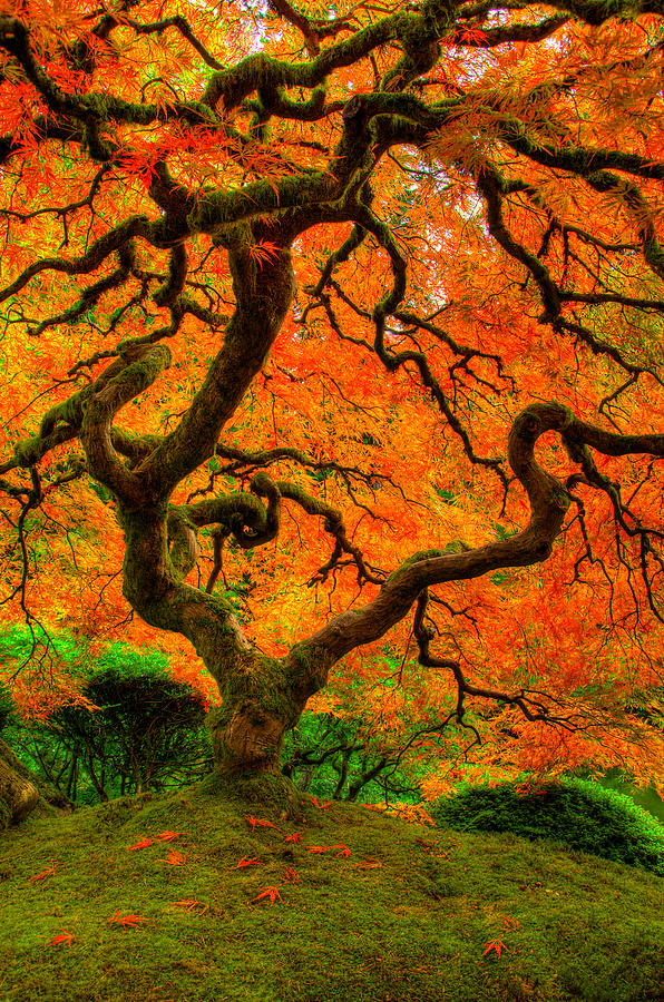 Tree Photograph - Structured Beauty by Dustin  LeFevre