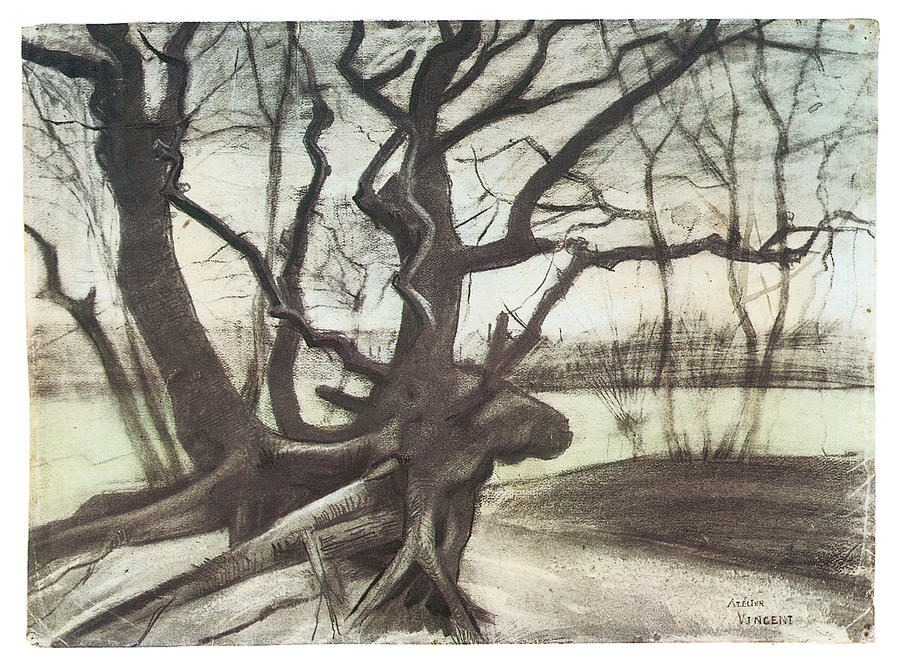 Van Gogh Drawings Trees Study Of A Tree Drawing
