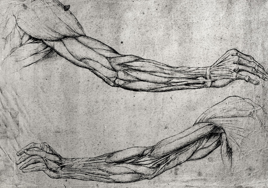 Da Drawing - Study Of Arms by Leonardo Da Vinci