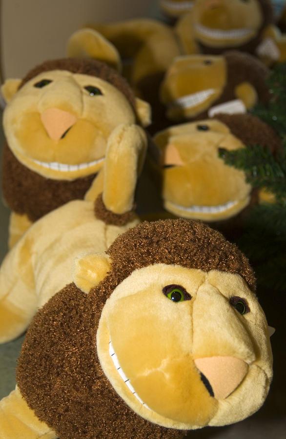 Stuffed Lions Photograph