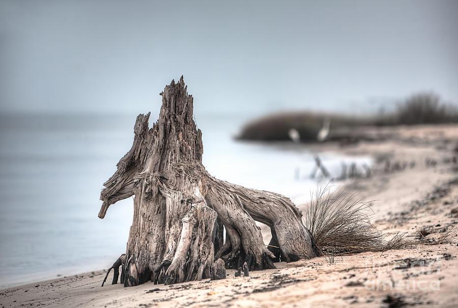 Tree Photograph - Stump Dragon by Joan McCool
