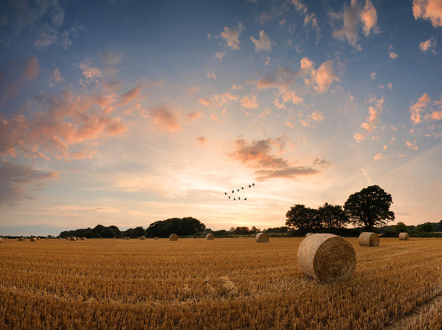 Art Photograph - Stunning Summer Landscape Of Hay Bales In Field At Sunset Digital Painting by Matthew Gibson