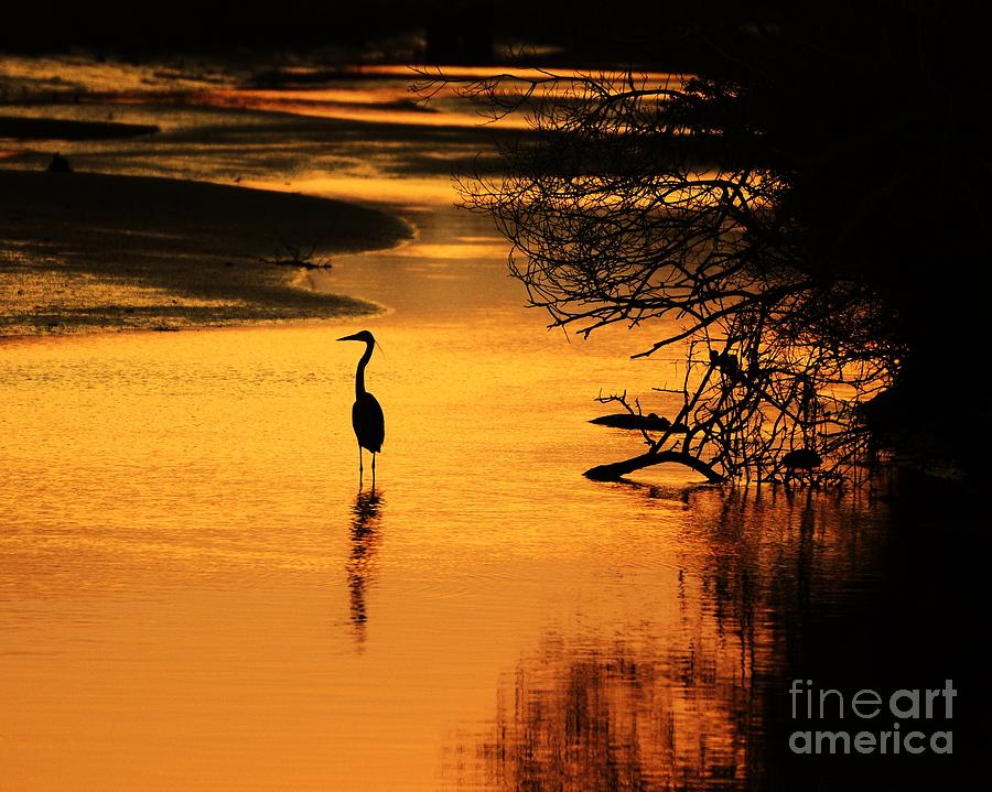 Sublime Silhouette Photograph