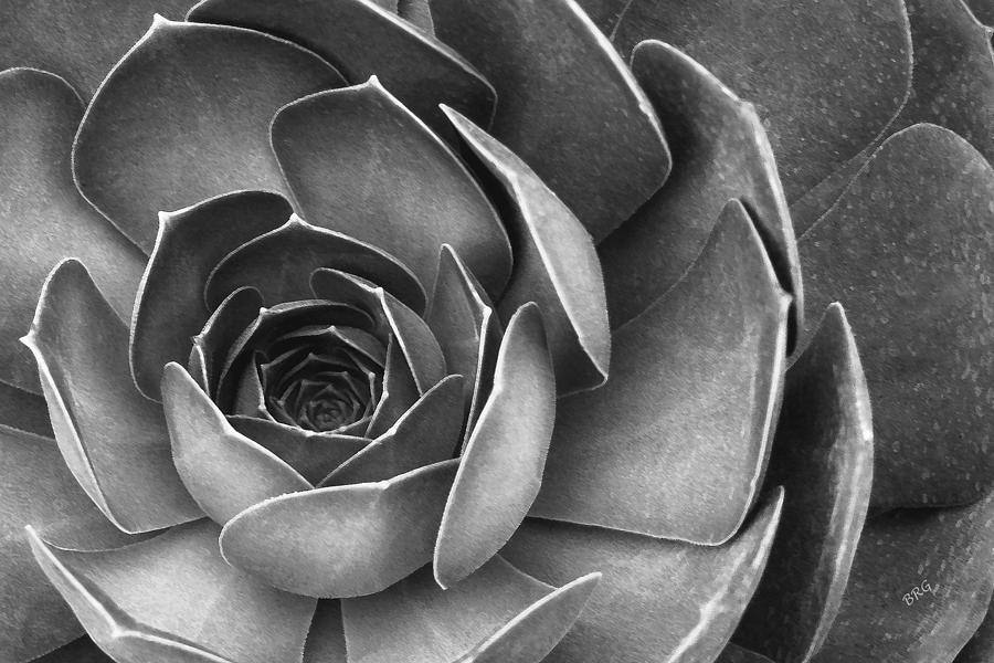 Succulent In Black And White Photograph