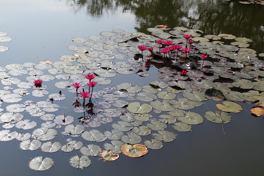 Sukhothai Historical Park - Sukhothai Thailand - 011365 Photograph