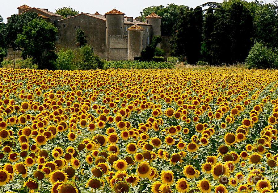 Sunflowers Photograph - Summer Bliss by France  Art