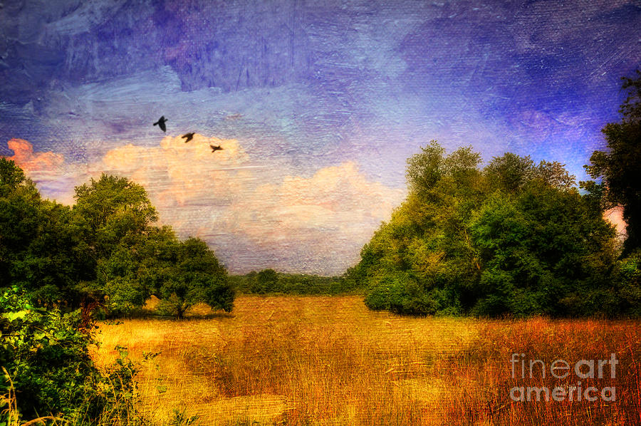 Summer Country Landscape Photograph  - Summer Country Landscape Fine Art Print