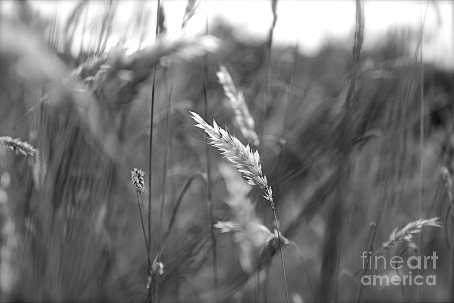 Summer Photograph  - Summer Fine Art Print