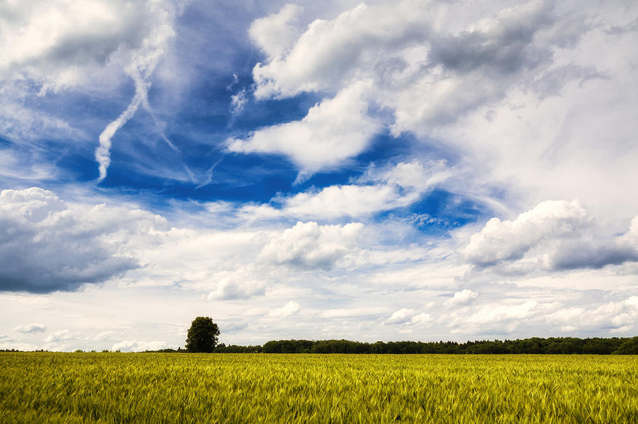 Blue Photograph - Summer Landscape With Cornfield Blue Sky And Clouds On A Warm Summer Day by Matthias Hauser