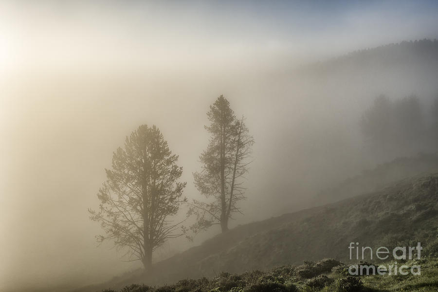 Summer Morning In Yellowstone Photograph  - Summer Morning In Yellowstone Fine Art Print