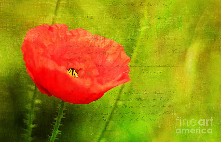 Summer Poppy Photograph  - Summer Poppy Fine Art Print