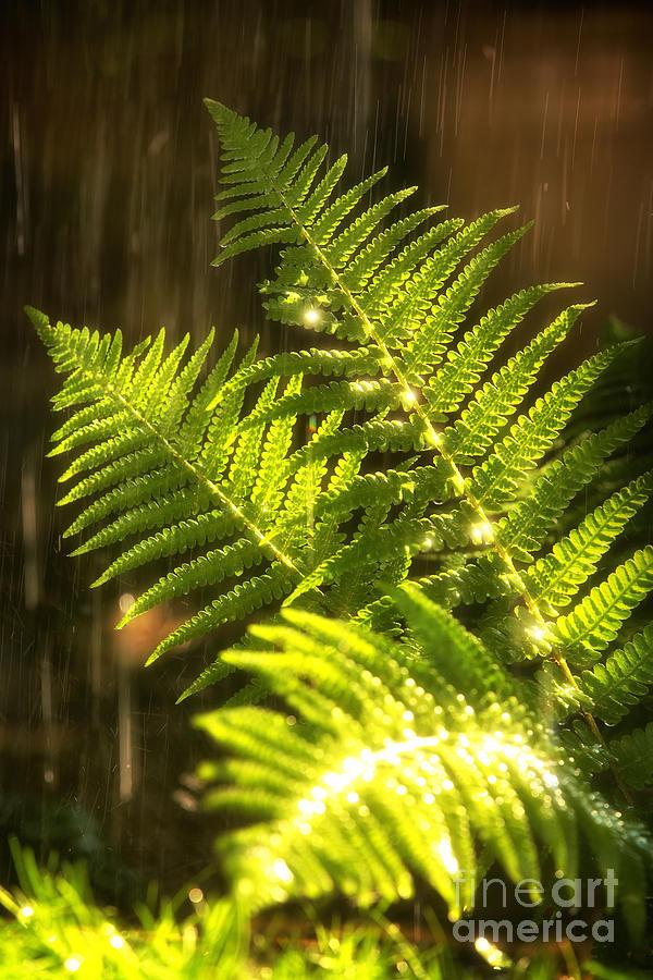 Fern Photograph - Summer Rain by Jane Rix