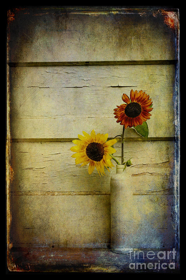 Summer Sunflowers Photograph