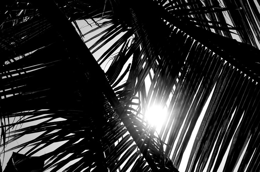 Sun Breaking Through Palm Trees Photograph