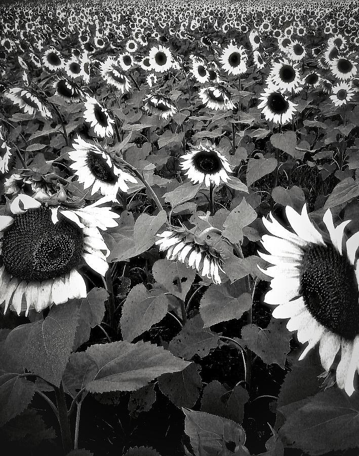 Sun Fam Photograph