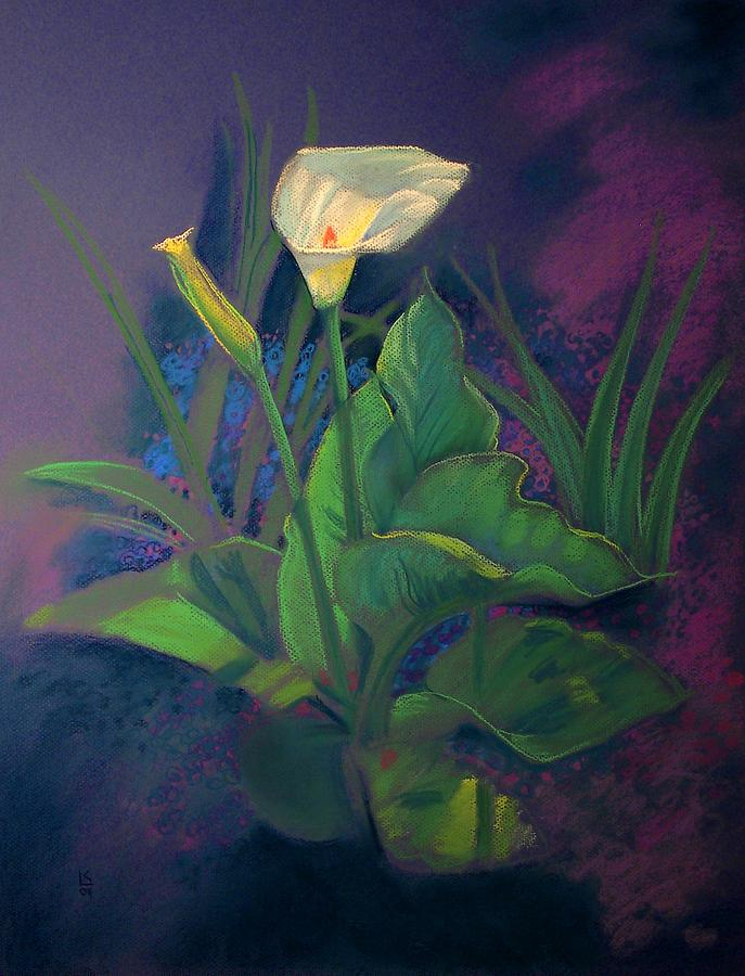 Sun Glowing Calla Painting  - Sun Glowing Calla Fine Art Print