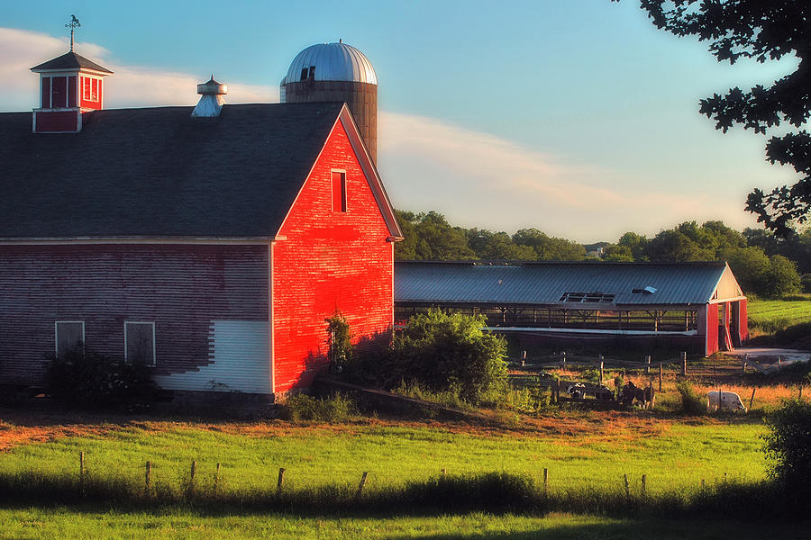 Farm Photograph - Sun Kissed by Joann Vitali
