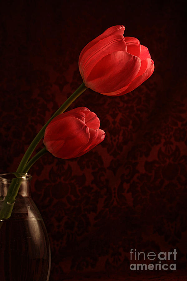 Sun Kissed Tulips Photograph