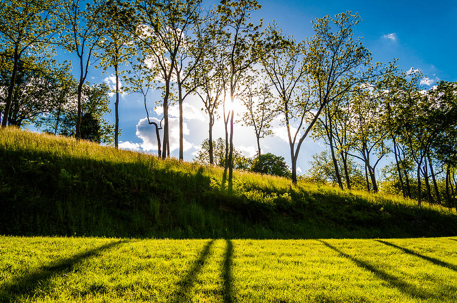 Abstract Pastel - Sun Shining Through Trees And Shadows On The Grass At Antietam National Battlefield Maryland by Jon Bilous