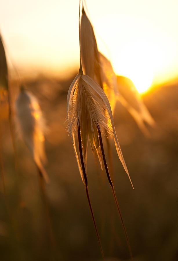 Spain Photograph - Sundown by Herbert Seiffert