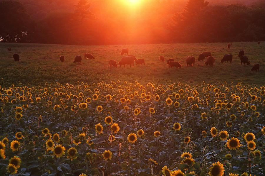 Sundown On Buttonwood Farm Photograph  - Sundown On Buttonwood Farm Fine Art Print
