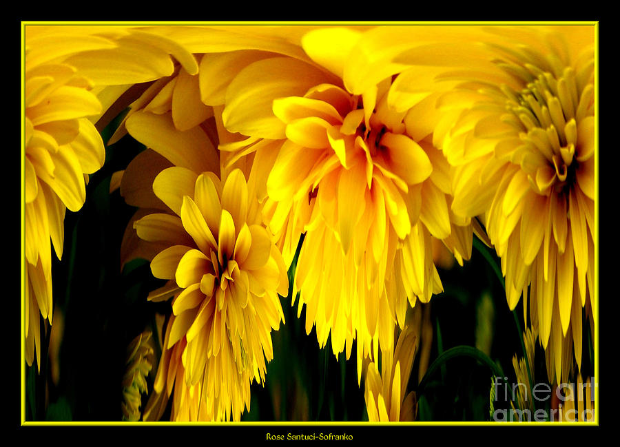 Sunflower abstract 1 by rose santuci sofranko
