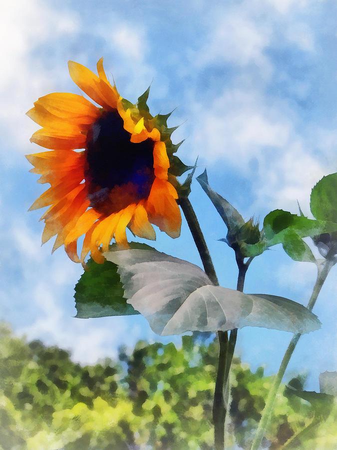 Sunflower Against The Sky Photograph