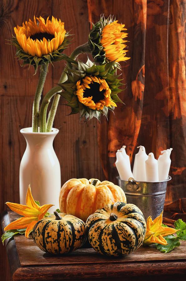 Sunflower And Gourds Still Life Photograph