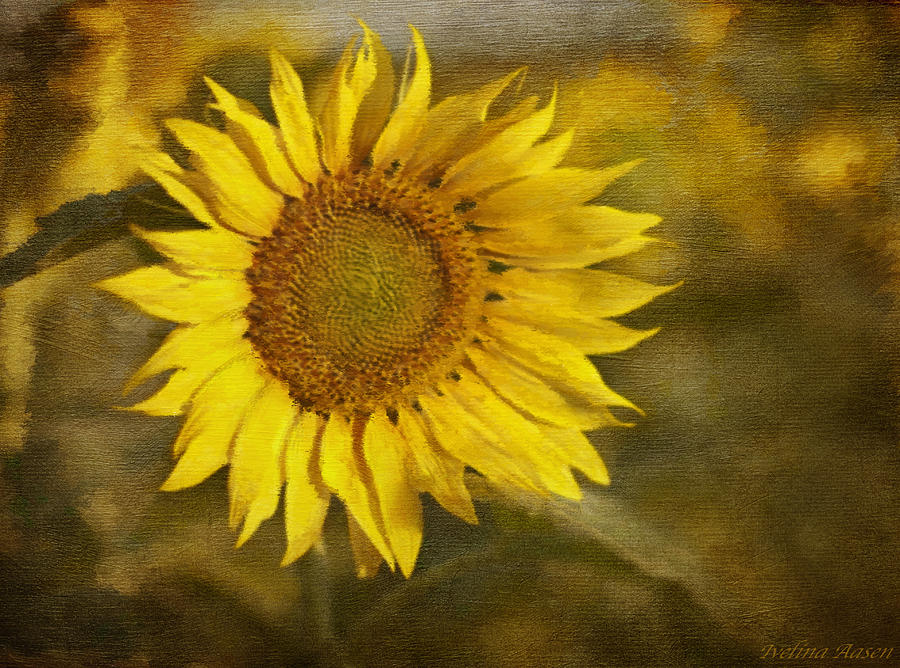 Sunflower And Sunshine  Photograph