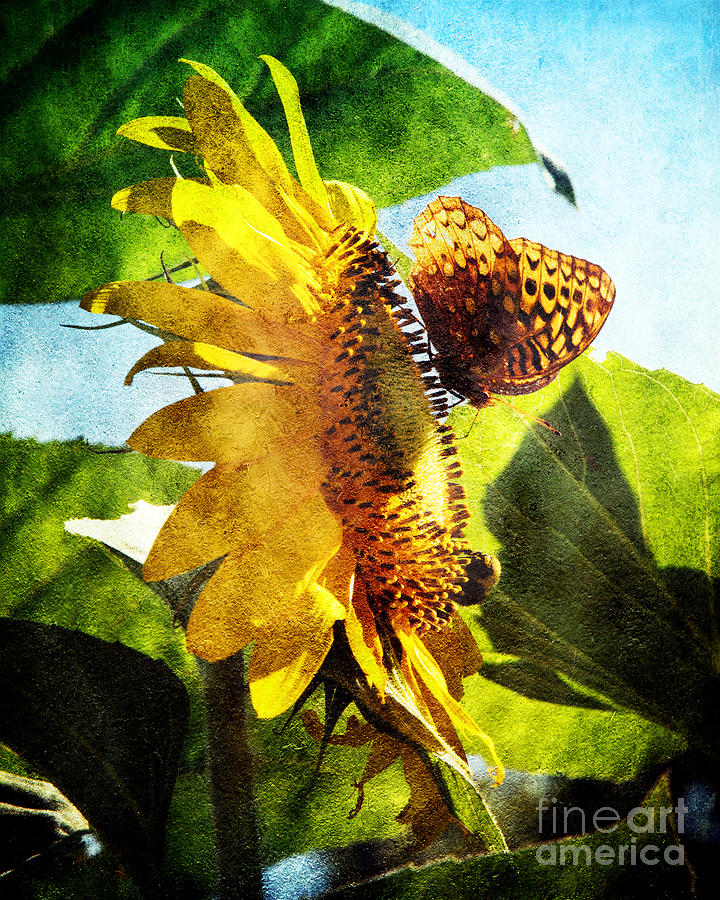 Sunflower Butterfly And Bee Photograph  - Sunflower Butterfly And Bee Fine Art Print