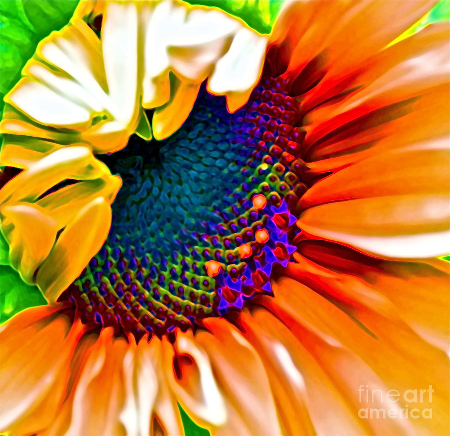 Sunflower Crazed Photograph  - Sunflower Crazed Fine Art Print
