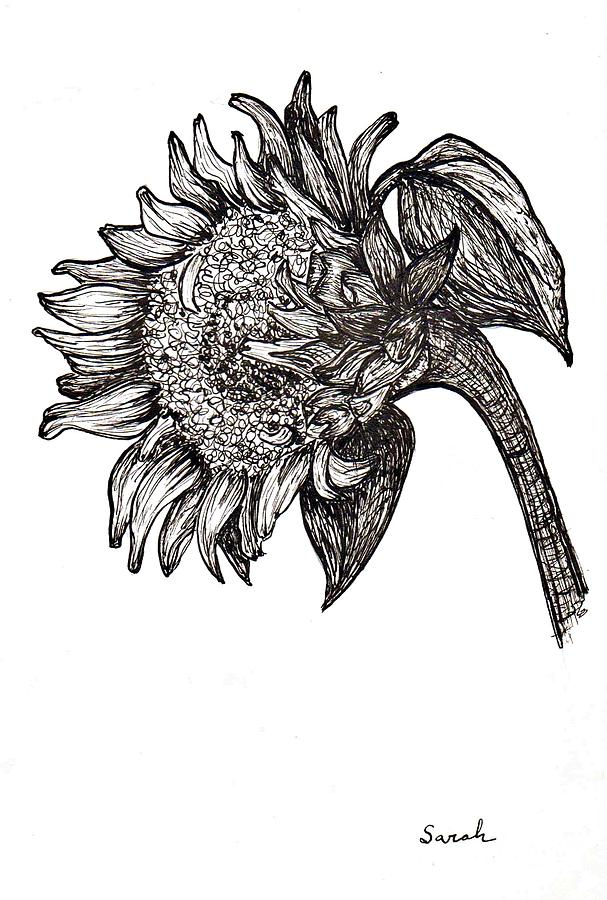 Sunflower In Pen And Ink Drawing