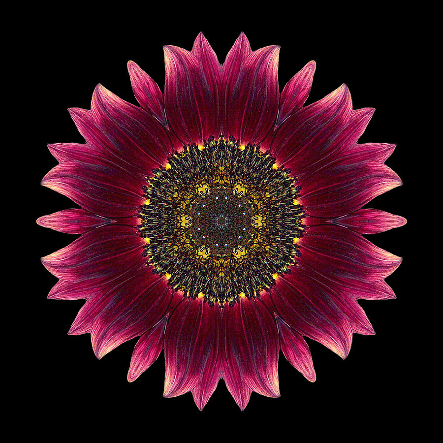 Sunflower Moulin Rouge I Flower Mandala Photograph
