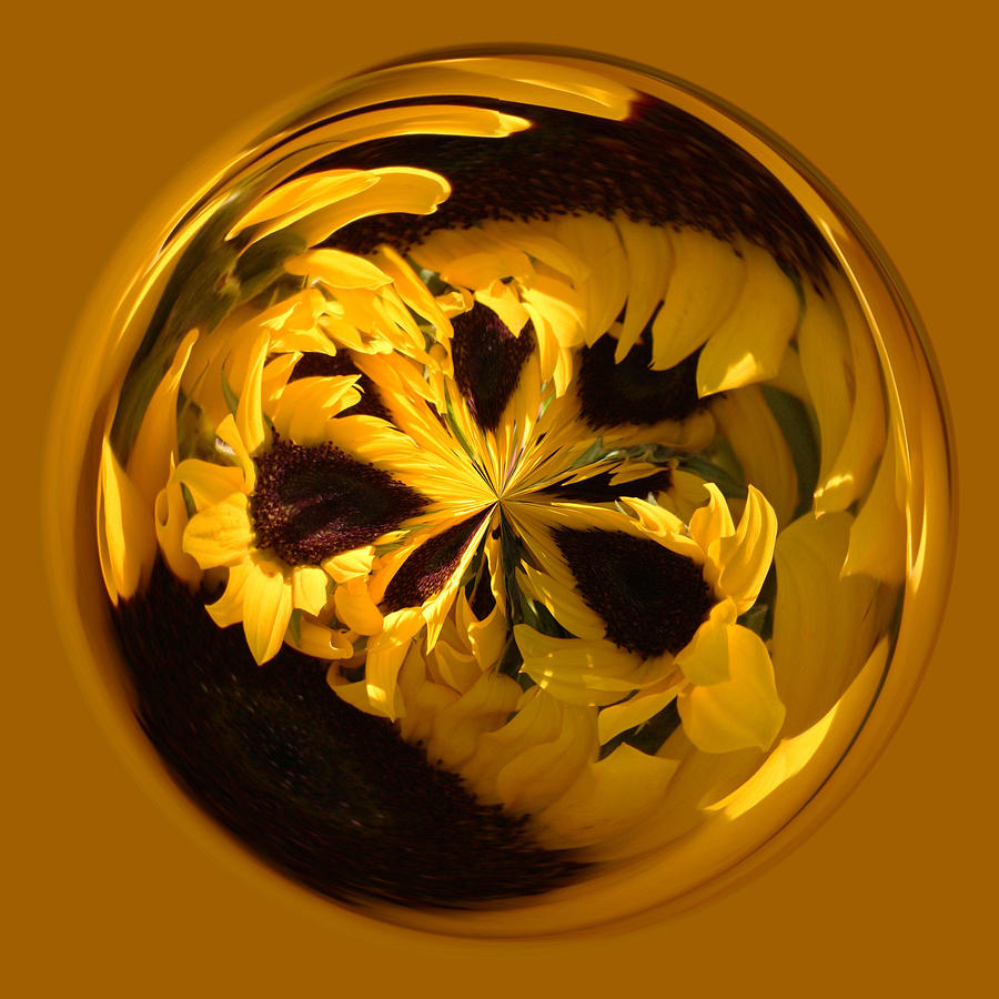 Sunflower Orb Photograph  - Sunflower Orb Fine Art Print