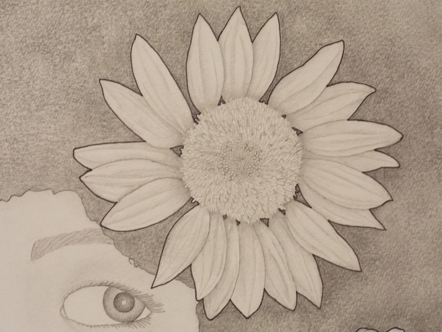 Sunflower Peeping Eye Drawing