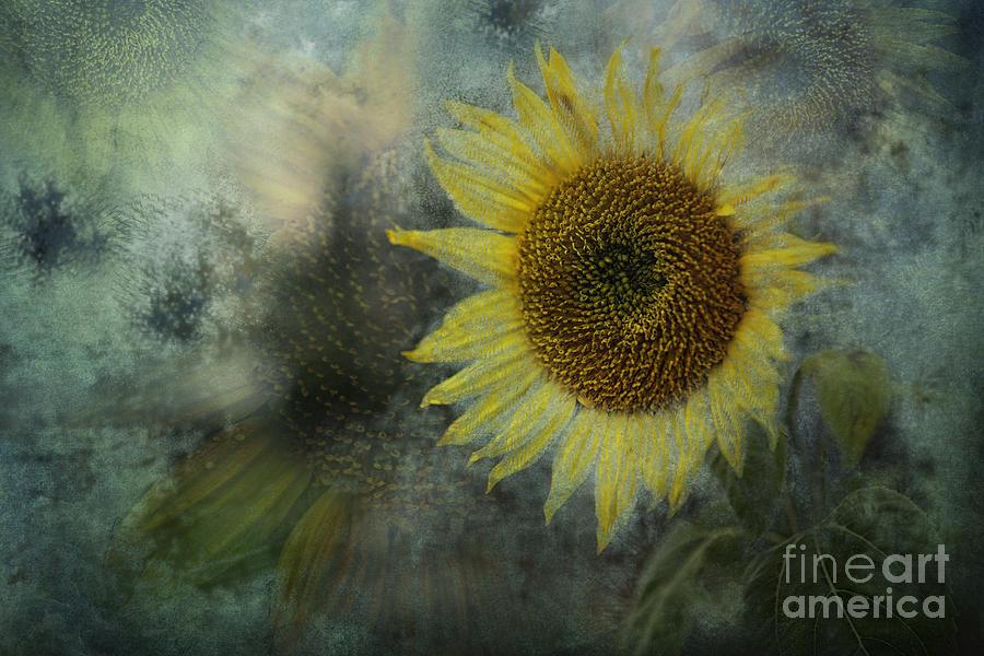 Sunflower Sea Photograph