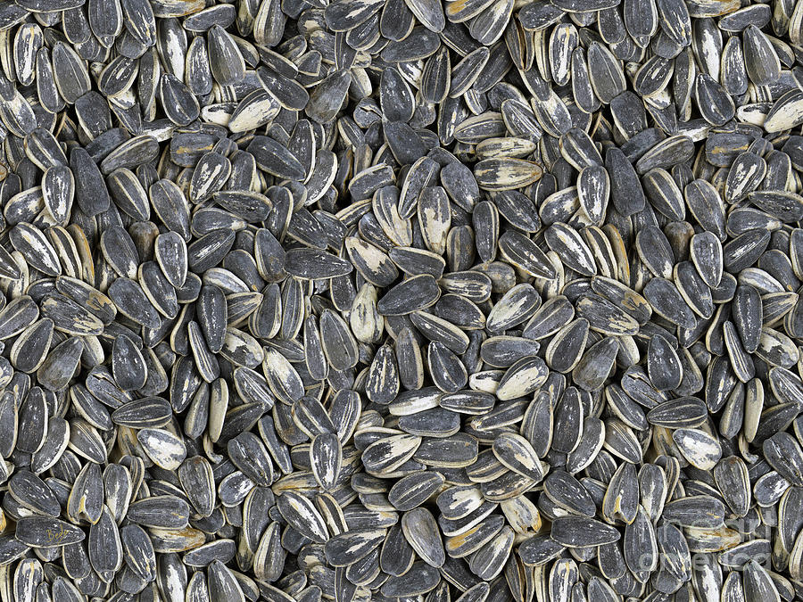 Sunflower Seeds Digital Art