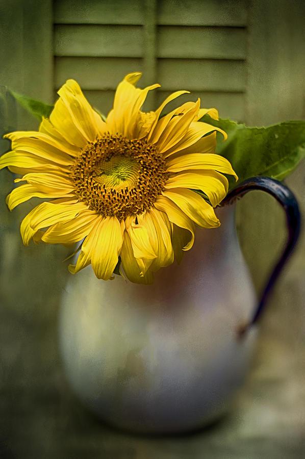 Sunflower Series I Photograph