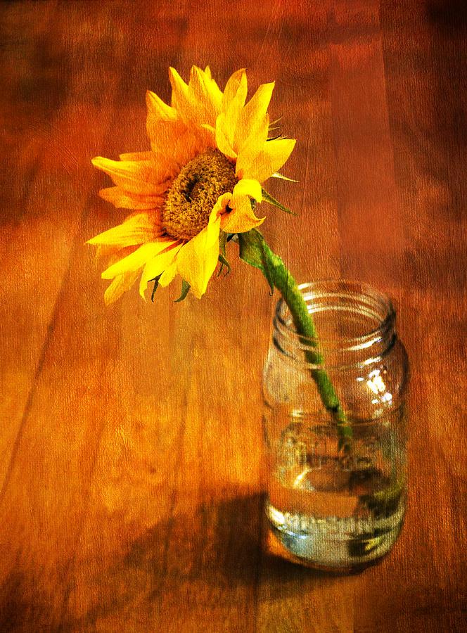 Sunflower Still Life Photograph