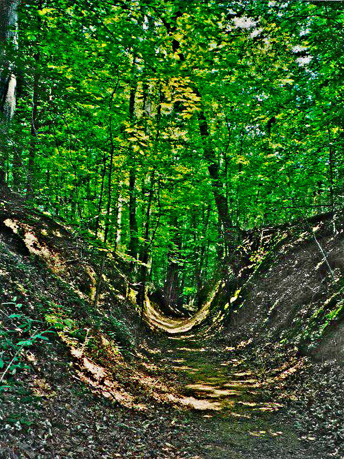 Sunken Trace At Mile 41 On  Natchez Trace Parkway-ms Photograph