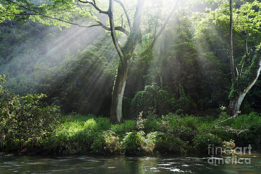 Sunlight Rays Through Trees Photograph