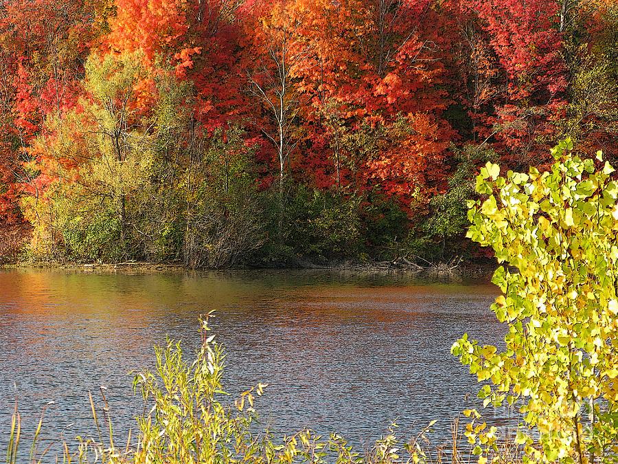 Sunlit Autumn Photograph