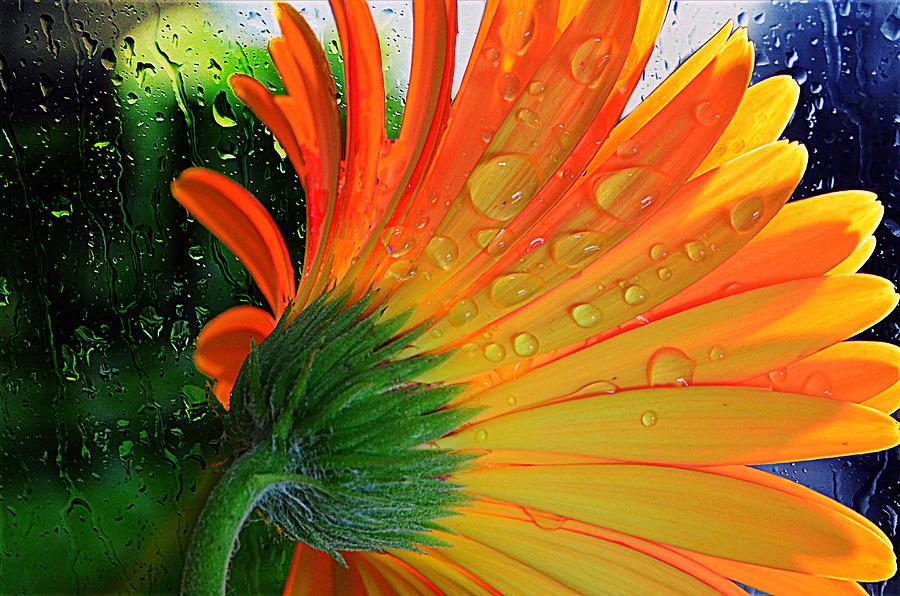 Daisy Photograph - Sunny Days Ahead...... by Tanya Tanski