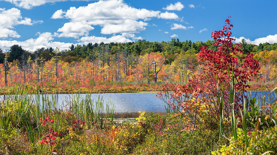 Autumn In New England Photograph - Sunny Fall Day by Bill Wakeley