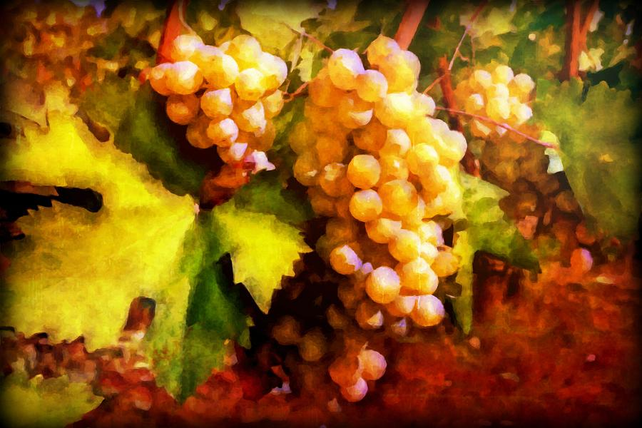 Sunny Grapes - Edition 2 Digital Art
