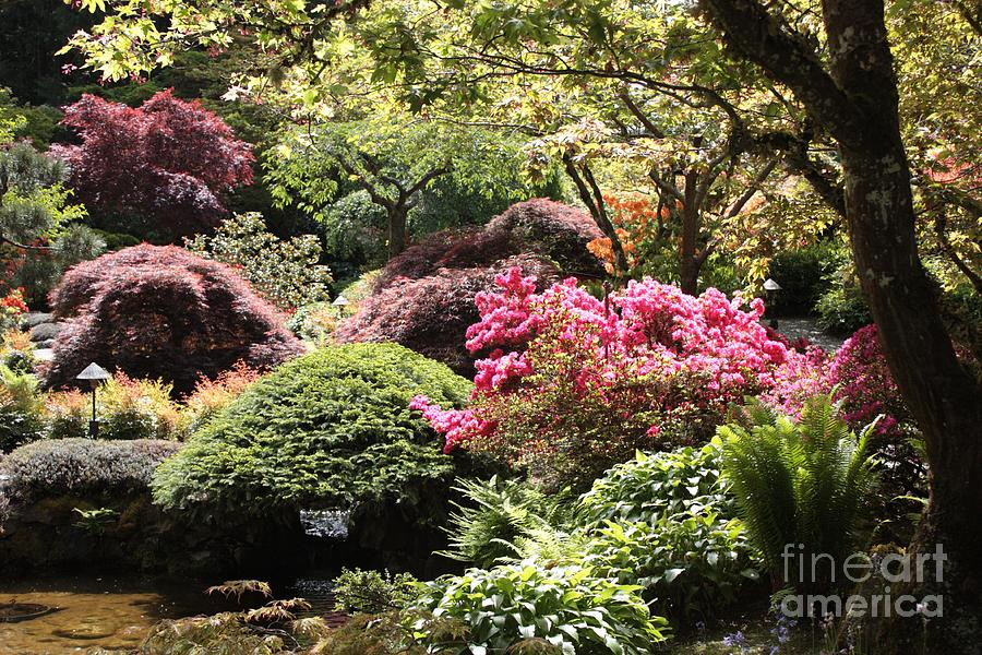 Sunny Japanese Garden Photograph