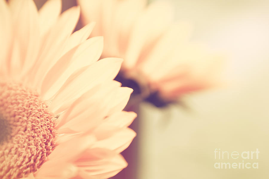 Flowers Photograph - Sunny Side Up by Lisa McStamp